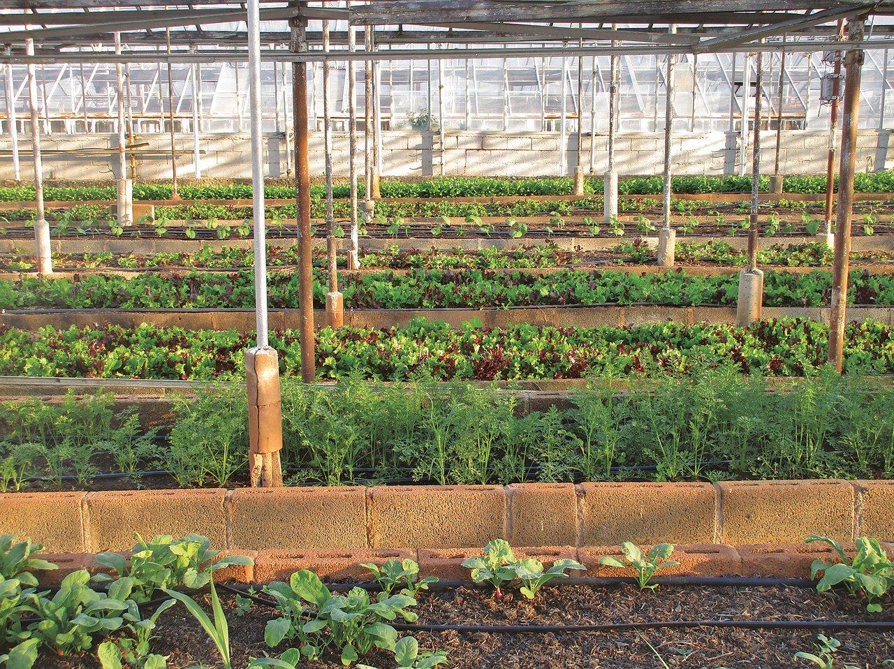 În România scade puternic producţia de legume în sere